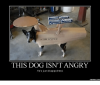 uss-enterprise-this-dog-isnt-angry-hes-just-disappointed-memes-com-14280806.png