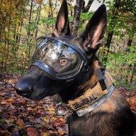 Doggy_
