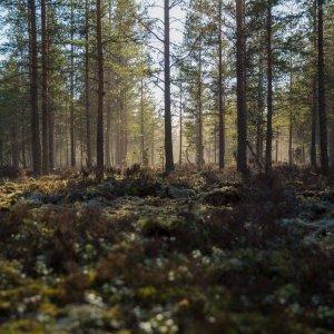 Metsä täynnä taistelijoita